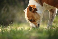 Dog from ground. Dog sniffing grass. Low angle Stock Photos