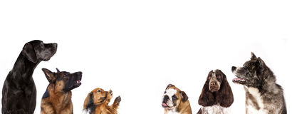 Dog group is looking up Royalty Free Stock Images
