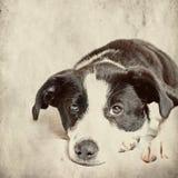 Dog  on grunge background Stock Photo