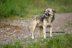 Dog in guard Stock Photos