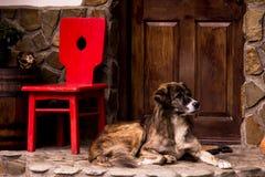 Dog guard Stock Photo