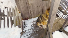 The dog guard the house stock video footage