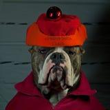 Dog a guard of Santa Claus Stock Images