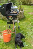 Dog guarded barbecue. Black dog guarded meat on grill stock image