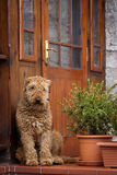 Dog guarding Stock Image