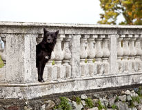 Dog guarding castle property Stock Photos
