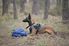 Dog guarding his master bag Royalty Free Stock Images