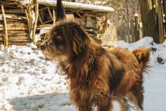 Dog guarding his yard royalty free stock photography