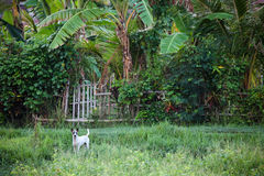 Dog guarding home Stock Images