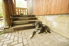 Dog Guarding House Near Stairway Royalty Free Stock Photos