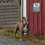 Dog guarding the house Stock Image