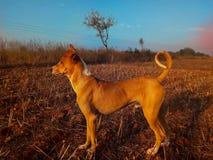 Dog guarding land bravely supervising stock photo