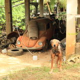 Dog guarding an old vehicle Royalty Free Stock Images