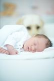 Dog Guarding Sleeping Baby Royalty Free Stock Photos