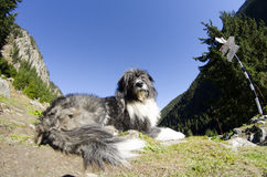 A dog that guards in the mountain Royalty Free Stock Image