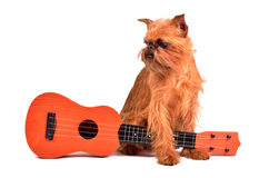 Dog with guitar Stock Photography