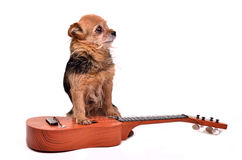 Dog with guitar Royalty Free Stock Images