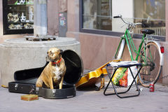 Dog with a guitar in Strasbourg Royalty Free Stock Photo