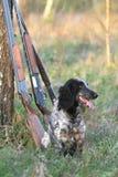 Dog with guns Stock Photo