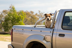 Dog guarding a truck Stock Image