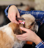 Dog hairdresser, hairstyle, spa for dogs Stock Image