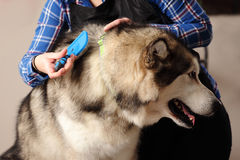 Dog hairdresser, hairstyle, spa for dogs. Visit to a dog hairdresser Royalty Free Stock Photos