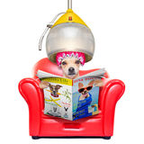 Dog at the  hairdressers, grooming Royalty Free Stock Photos