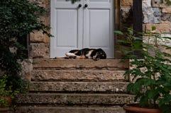 Small dog sleeping on the doorstep. stock image