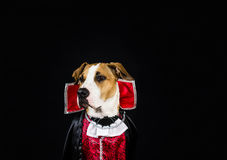 Dog in halloween costume Stock Photography