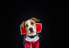 Dog in halloween costume stock photo