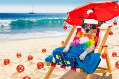 Dog in hammock as santa claus on christmas at the beach. Jack russell dog in hammock beach chair on summer christmas vacation holidays, with red santa claus hat royalty free stock photos