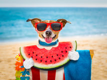 Dog on  hammock or beach chair Royalty Free Stock Images
