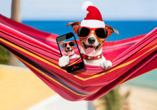 Dog on hammock at christmas royalty free stock photography