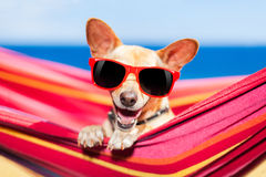 Dog on hammock Royalty Free Stock Photos