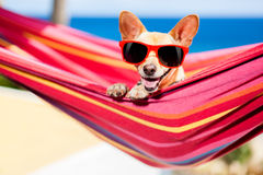 Dog on hammock Royalty Free Stock Images
