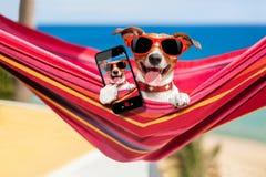 Dog on hammock selfie Stock Photography