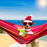 Dog on hammock on summer christmas holidays stock photography