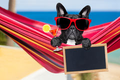 Dog on hammock in  summer Royalty Free Stock Image