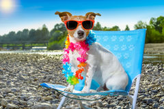 Dog in hammock on summer Royalty Free Stock Photos