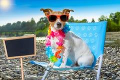 Dog in hammock on summer Stock Photos