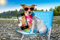 Dog in hammock on summer Stock Photo