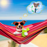 Dog on hammock in summer Stock Photo
