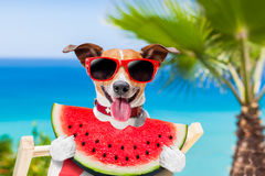 Dog on hammock and watermelon Stock Photography