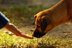 Dog and hand Stock Photography