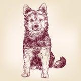 Dog hand drawn vector illustration sketch Stock Images