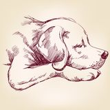 Dog hand drawn vector llustration. Realistic sketch Royalty Free Stock Images