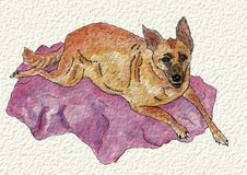 A dog hand painted, on a blanket, in watercolor and ink. Royalty Free Stock Photography