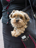 Dog in a handbag Royalty Free Stock Images