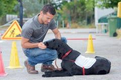 Dog handler feeding treat to dog. Dog stock photography