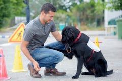 Dog handler at work. Dog stock photo